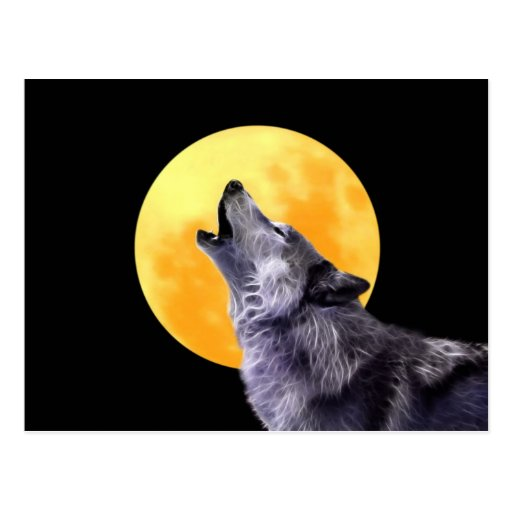 Wolf howls at the full moon postcard