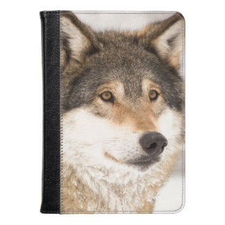 Wolf in a winter forest KINDLE Fire case