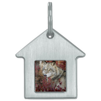 Wolf in red foliage pet name tag