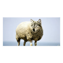 Wolf in Sheep Clothing Card