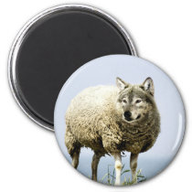 Wolf in Sheep Clothing Magnet