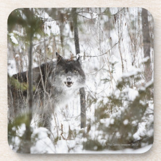 Wolf In The Forest In Winter Beverage Coaster
