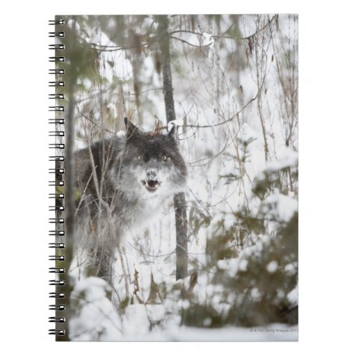 Wolf In The Forest In Winter Spiral Notebook