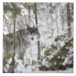 Wolf In The Forest In Winter Tile