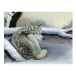 Wolf in the Snow Animal Art Post Card