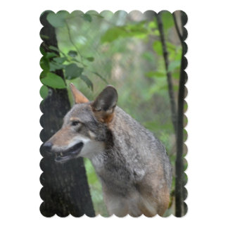 Wolf in the Wilderness 5x7 Paper Invitation Card