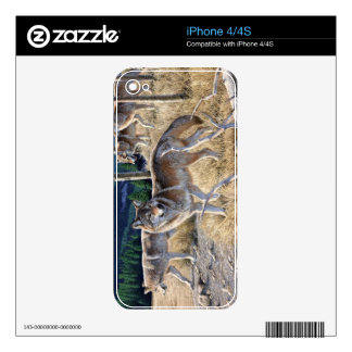 Wolf in winter forest iPhone 4S decal