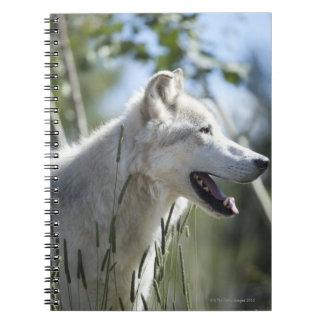 Wolf in Yellowstone 2 Notebooks