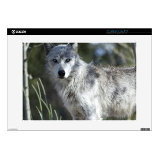 """Wolf in Yellowstone Skin For 15"""" Laptop"""