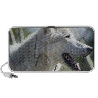 Wolf in Yellowstone. Notebook Speaker