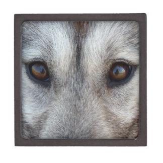 Wolf Jewelry Box Husky Wild Dog Eyes Wolf Pup Box Premium Trinket Box