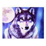 Wolf Look - Lonely Wolf Postcard