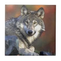 Wolf Lovers Art Ceramic Tile