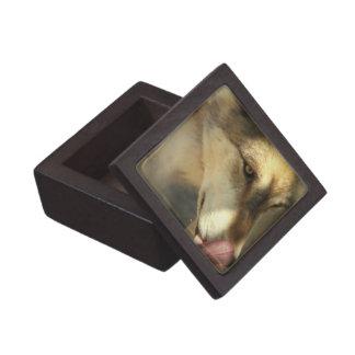 Wolf Lunch Premium Gift Box