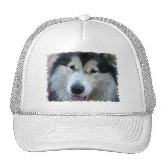 Wolf Malamute Picture Baseball Hat