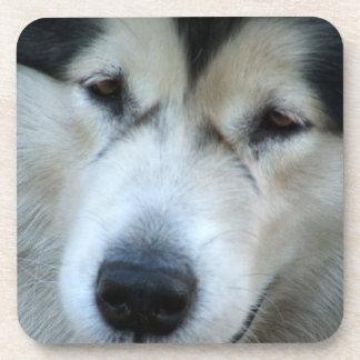 Wolf Malamute Picture Cork Coasters