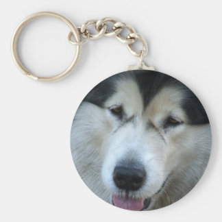 Wolf Malamute Picture Keychain