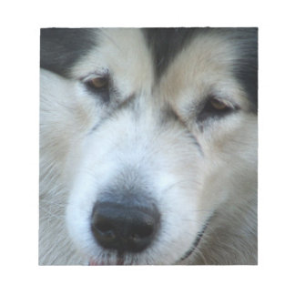 Wolf Malamute Picture Notepad
