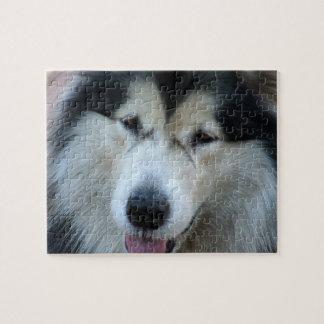 Wolf Malamute Picture Puzzle