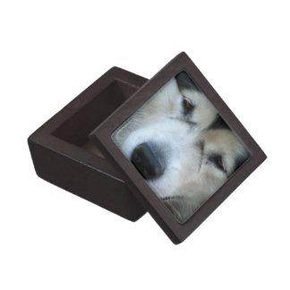 Wolf Malamute Picture Small Gift Box Premium Gift Box