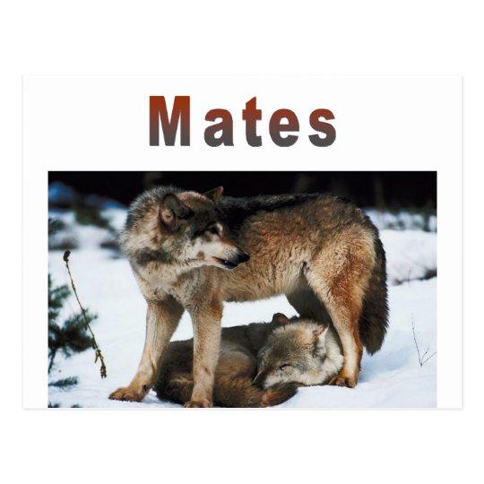 Wolf Mates Line Postcard