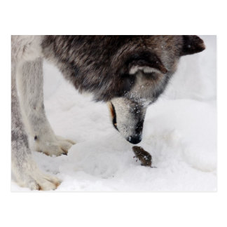 Wolf Meets Mouse Post Cards