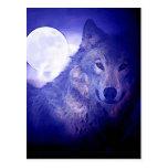 Wolf & Moon Post Card