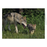 Wolf mother with young pup cards