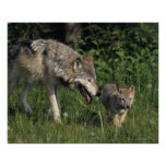 Wolf mother with young pup print