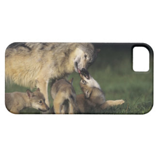 Wolf mother with young pups iPhone SE/5/5s case
