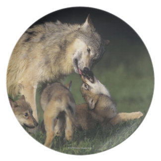 Wolf mother with young pups melamine plate