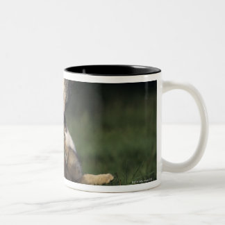 Wolf mother with young pups coffee mugs