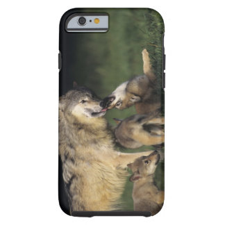 Wolf mother with young pups tough iPhone 6 case
