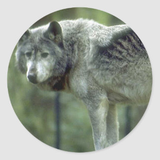 Wolf on a Tree Stump Classic Round Sticker