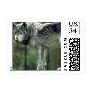 Wolf on a Tree Stump Stamp