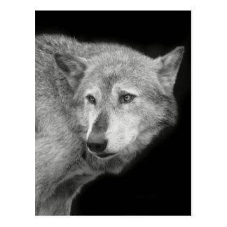 Wolf Pack Leader copy.jpg Postcard