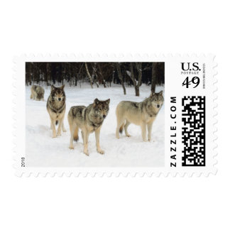 Wolf Pack Postage Stamp