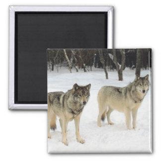 Wolf Pack Refrigerator Magnet