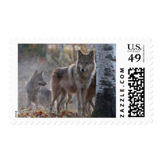 Wolf pack stamp