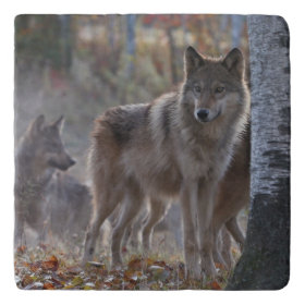 Wolf pack trivets