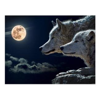 Wolf Pair Moon Night Gothic Fantasy Postcard