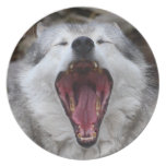 wolf party plate