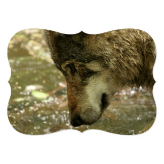 Wolf Pawing Water 5x7 Paper Invitation Card