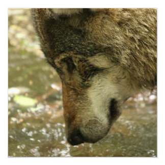 Wolf Pawing Water 5.25x5.25 Square Paper Invitation Card