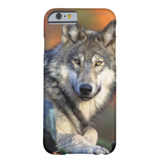 Wolf Photograph Barely There iPhone 6 Case