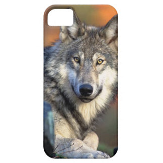 Wolf Photograph iPhone 5 Cover