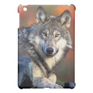 Wolf Photograph Case For The iPad Mini