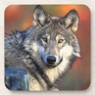 Wolf Photograph Coaster