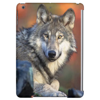 Wolf Photograph Image Cover For iPad Air
