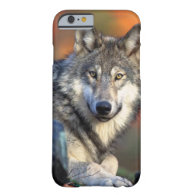 Wolf Photograph iPhone 6 Case